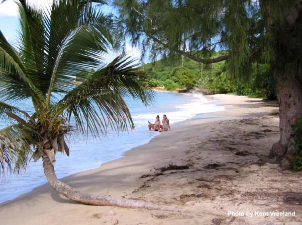 Cane Bay Beach, St. Croix with palms